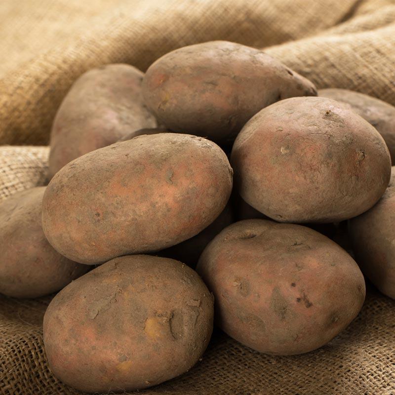 La patata en Montaña Alavesa