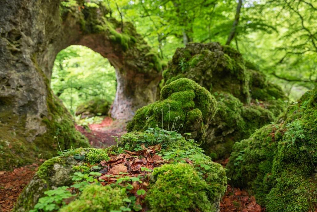 Naturaleza en Montaña Alavesa